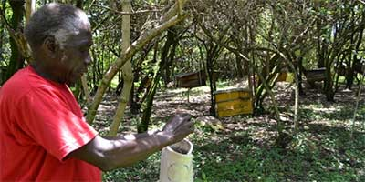 Isaiah Marwa in his apiary