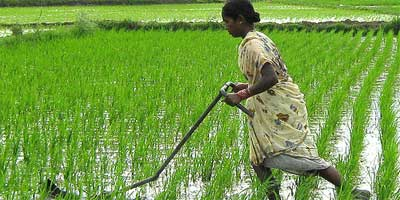 The Mandava weeder, a farmers' innovation, is lightweight and easy for women to use. | Photo: Manipadma Jena/IPS