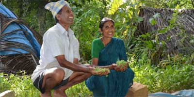 Karnataka farmers Guruswami and Shanta collect handfuls of algae from their pond to add to animal feed. | Photo: Alina Paul-Bossuet